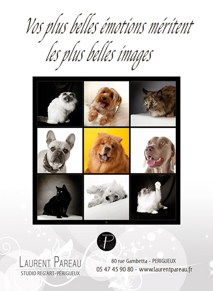 flyer-animaux